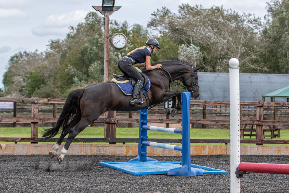 An image a horse jumping